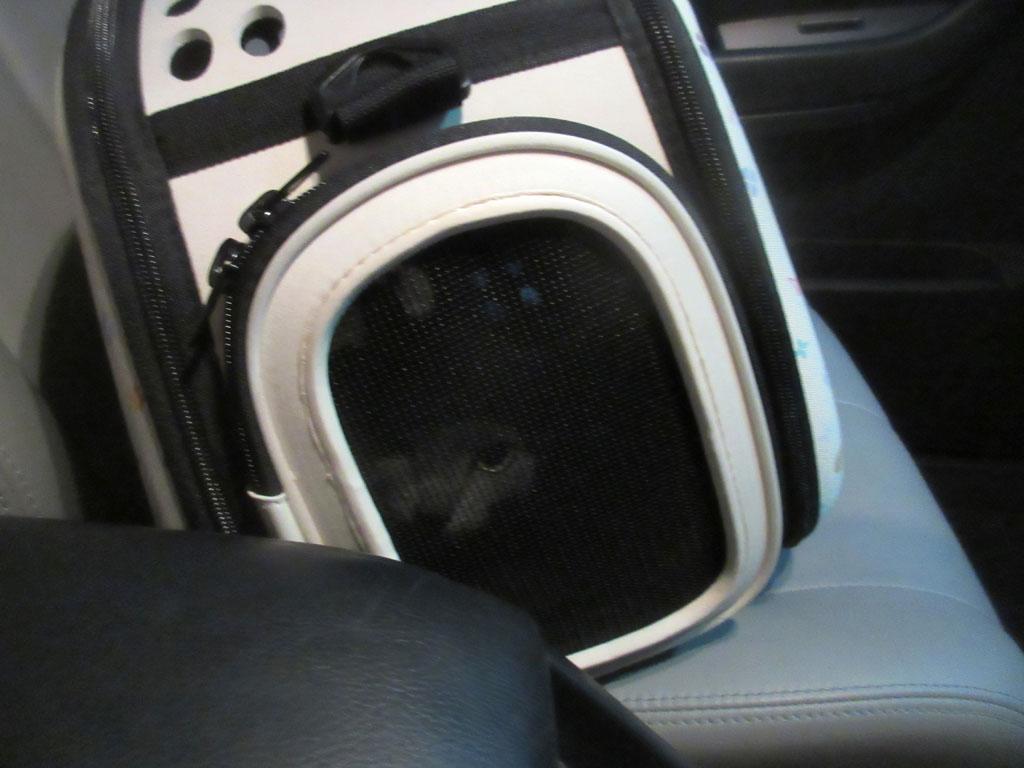 車中のロシ子。