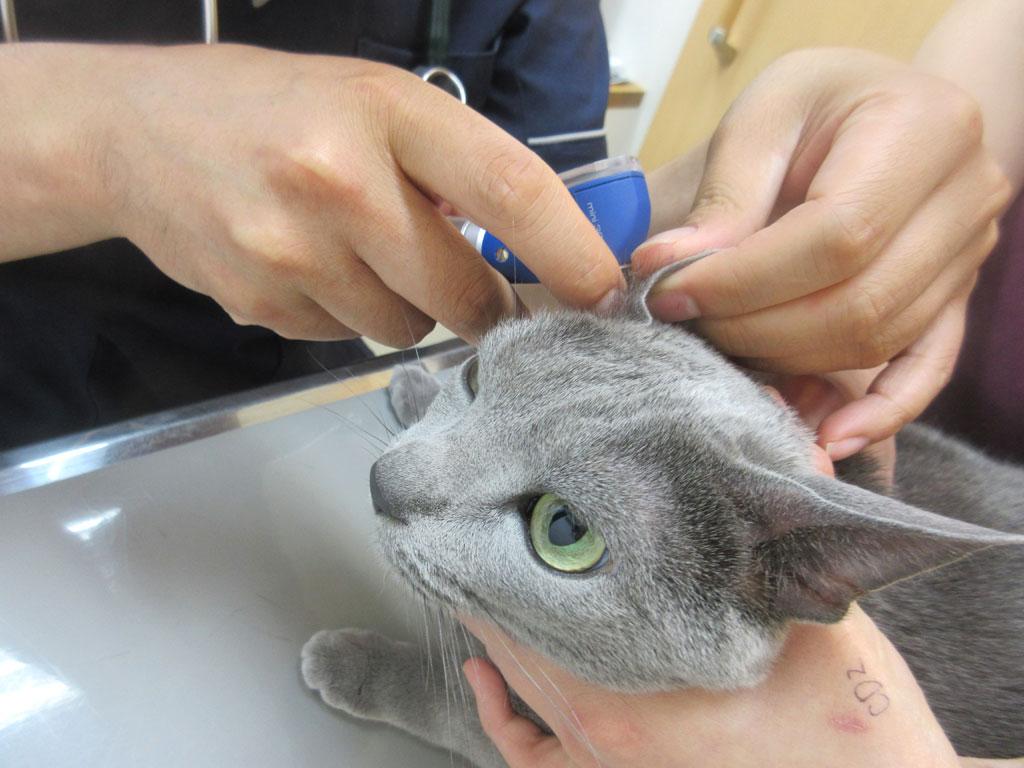ワクチン注射の前の検診。
