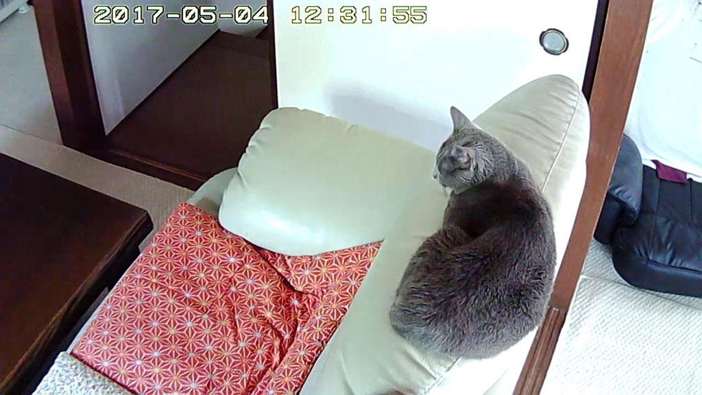 ロシ子がここにいました。