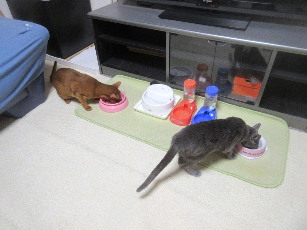 美味しいご飯を猫たちに。