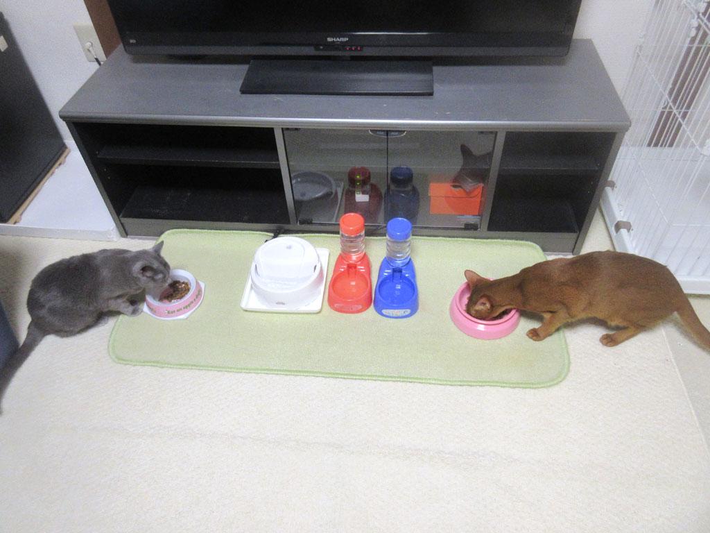 我が家の猫たちのご飯の様子。