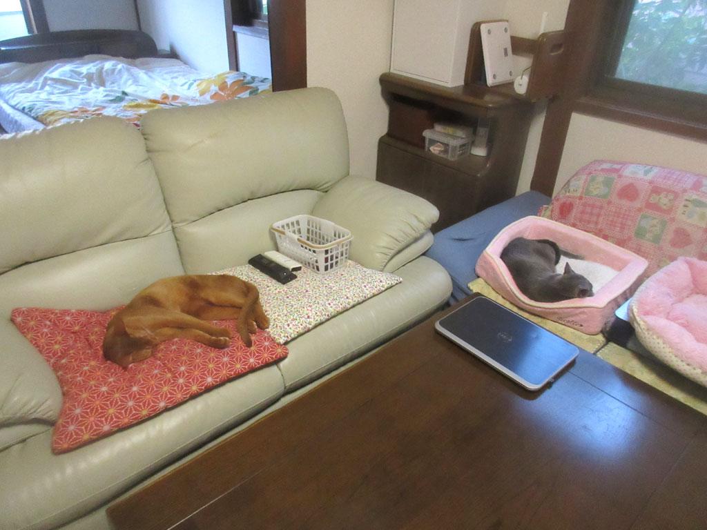 気持ち良さそうに寝てる猫たち。