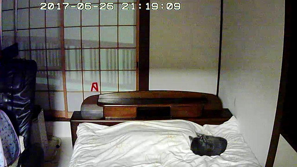 ロシ子はここでお休み。