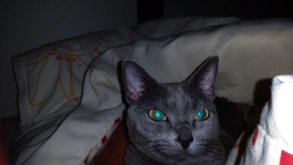 エメラルドグリーンの目のロシ子。