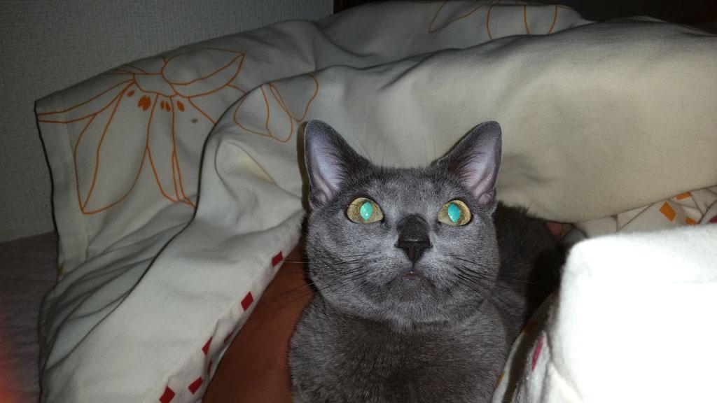 神秘的な目のロシ子。