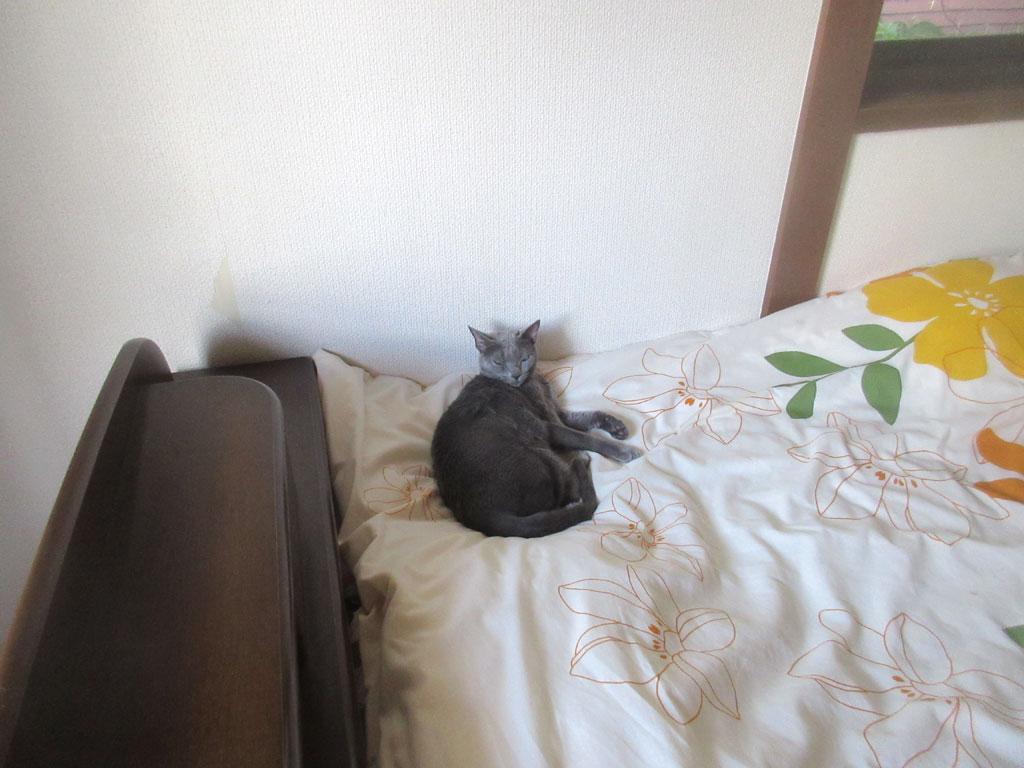 ぐっすりと寝たロシ子ちゃん。