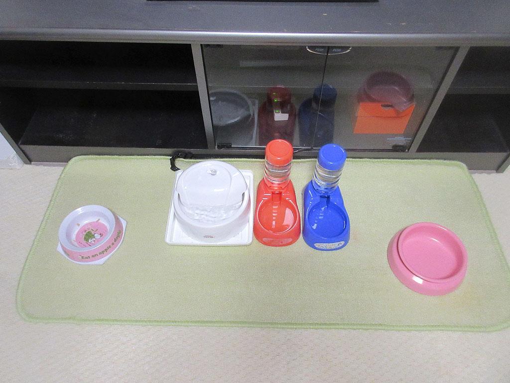 ご飯後の猫たちのお皿。