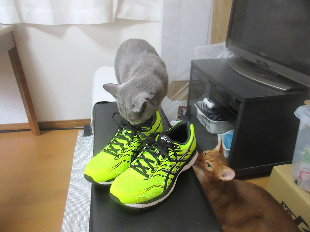 新しい物好きな猫たち。
