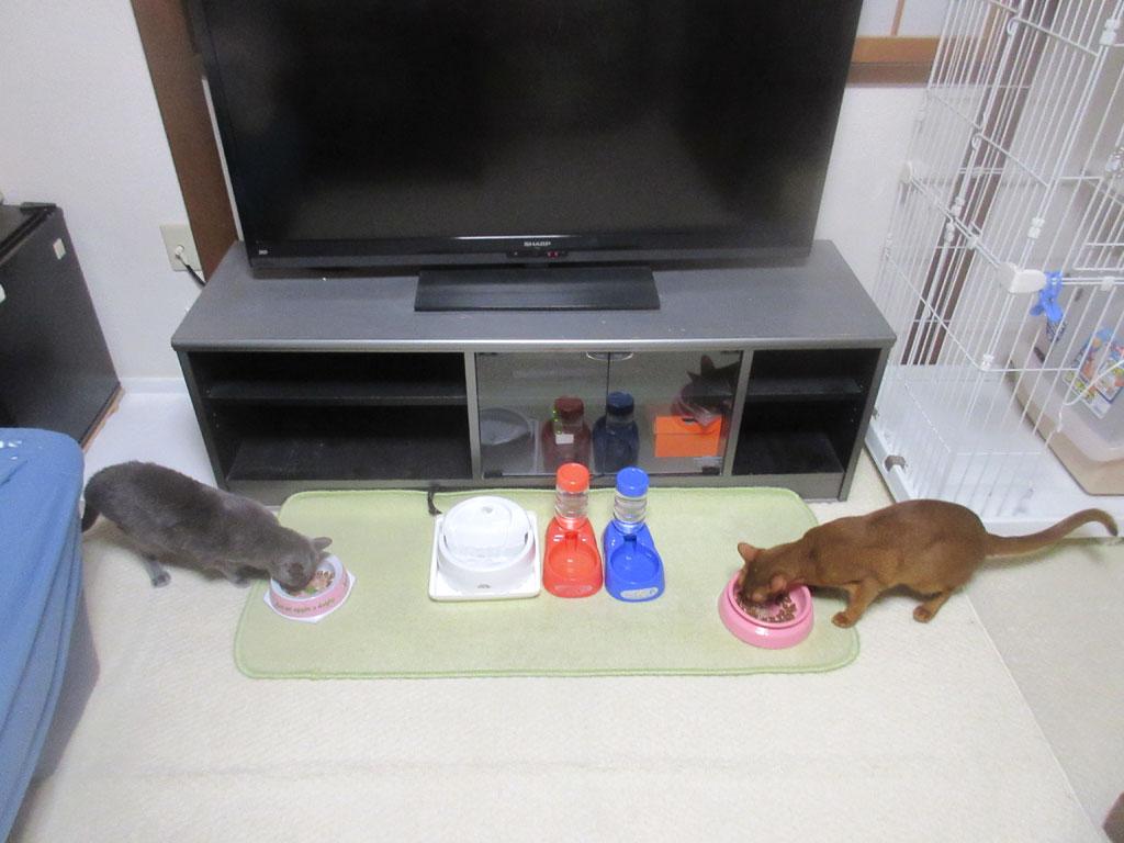 猫たちのご飯の様子。