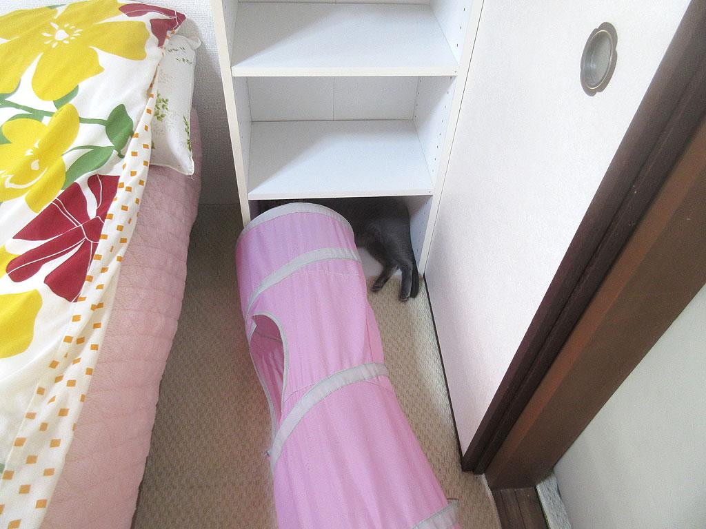 2階のロシ子ちゃん。