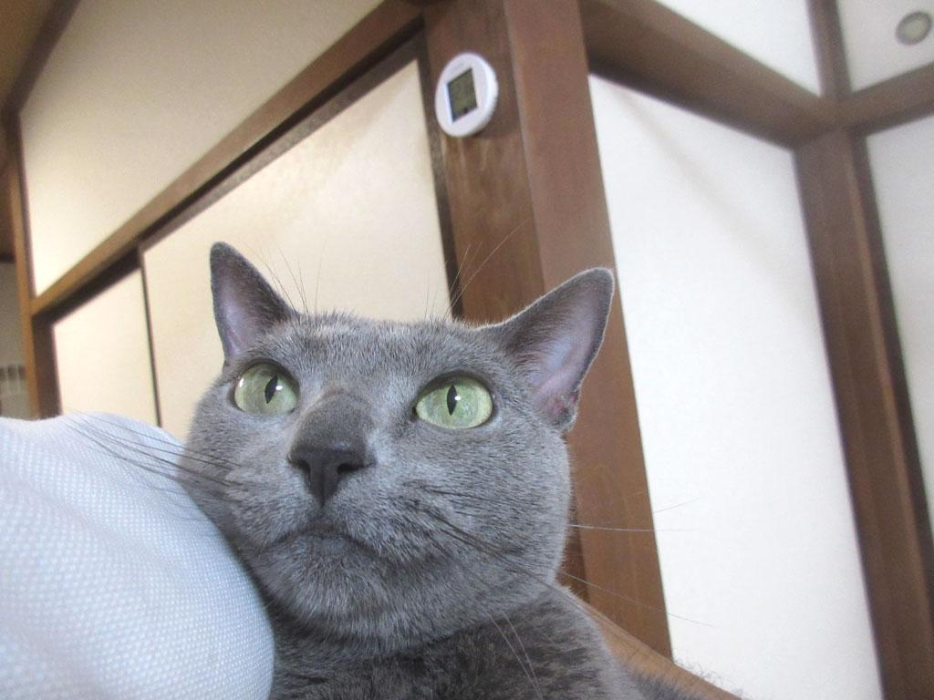 ロシ子の安心した表情。