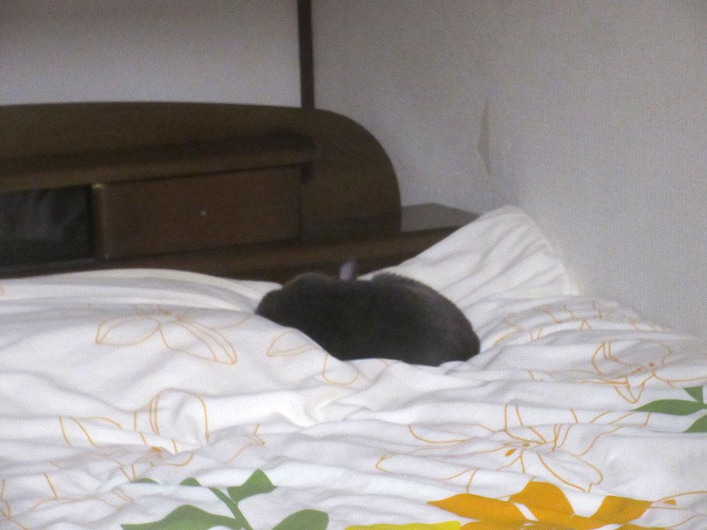 寝んねのロシ子ちゃん。