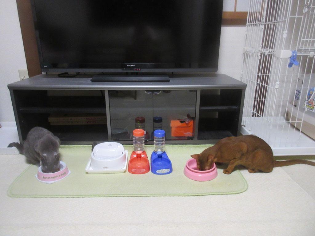 猫たちのご飯の風景。