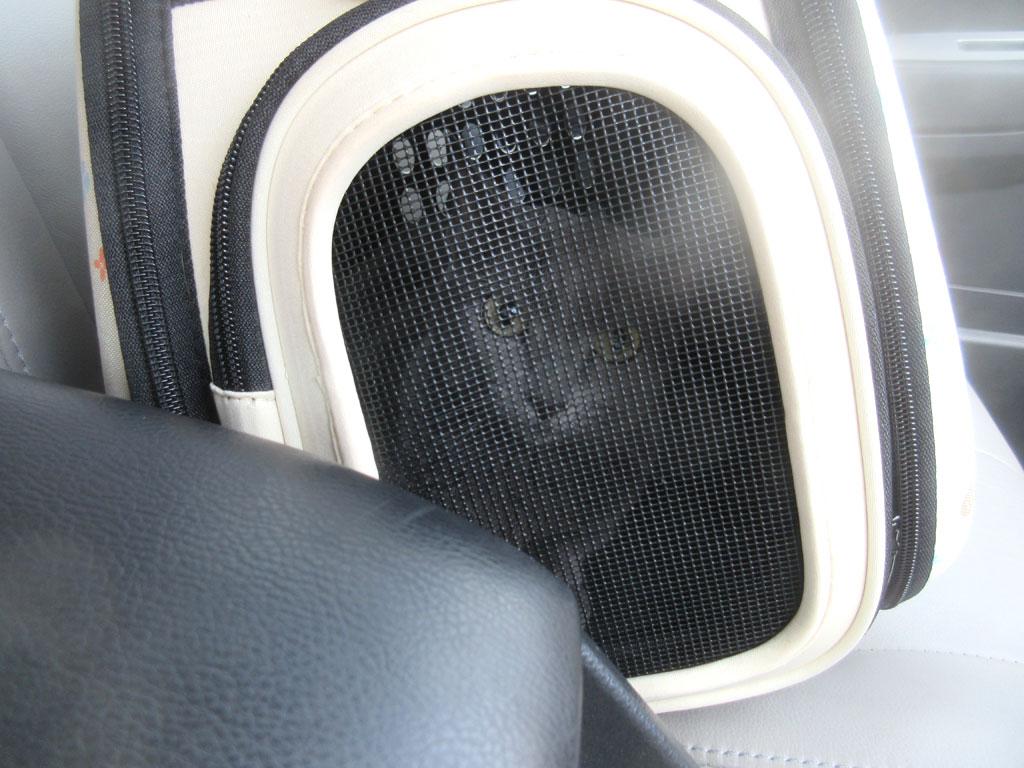 車の中のロシ子ちゃん。