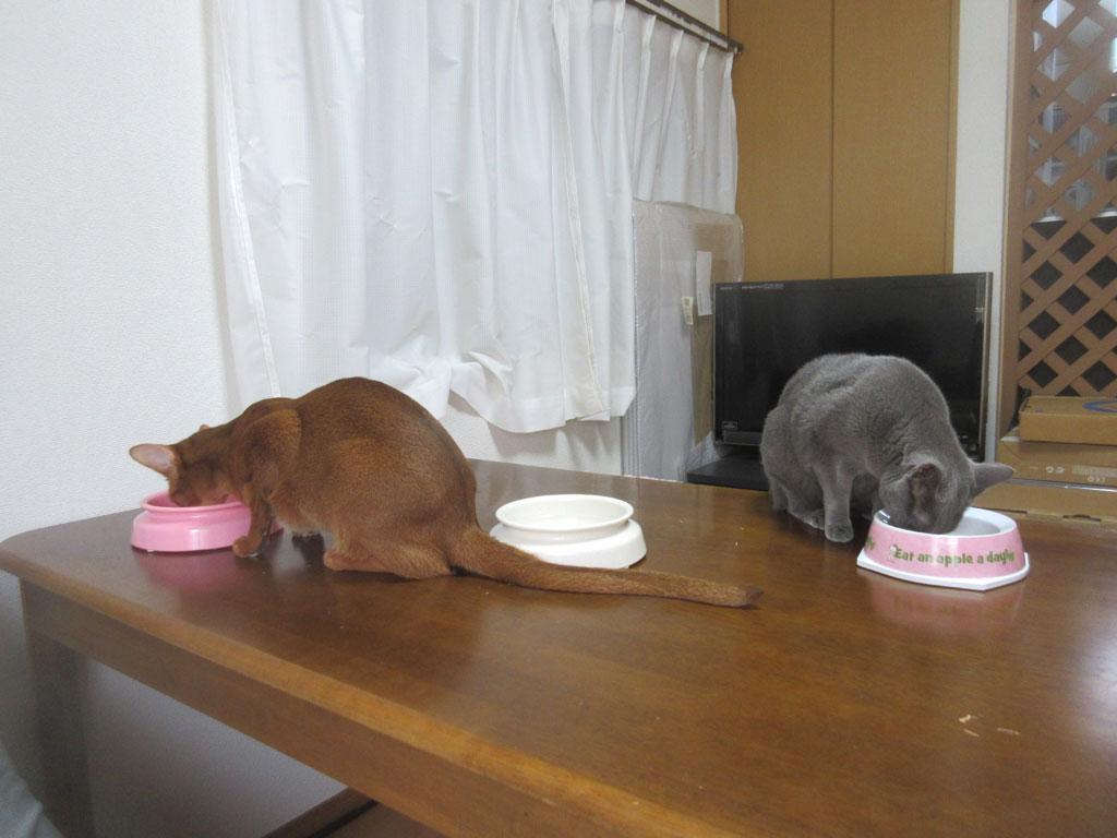 猫たちのお昼ご飯の様子。