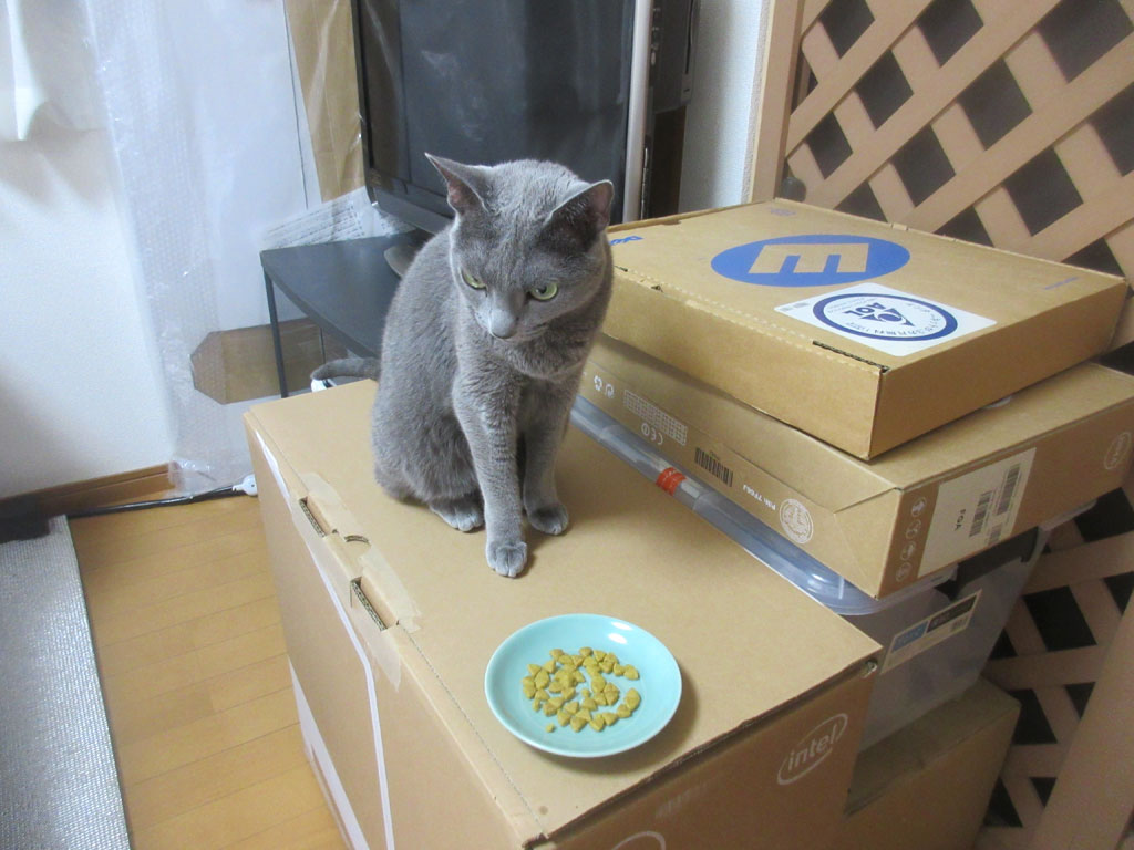 ロシ子に間食を、1回目。