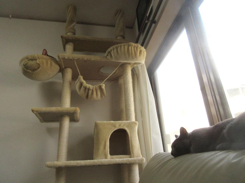 昼過ぎの我が家の猫たち。