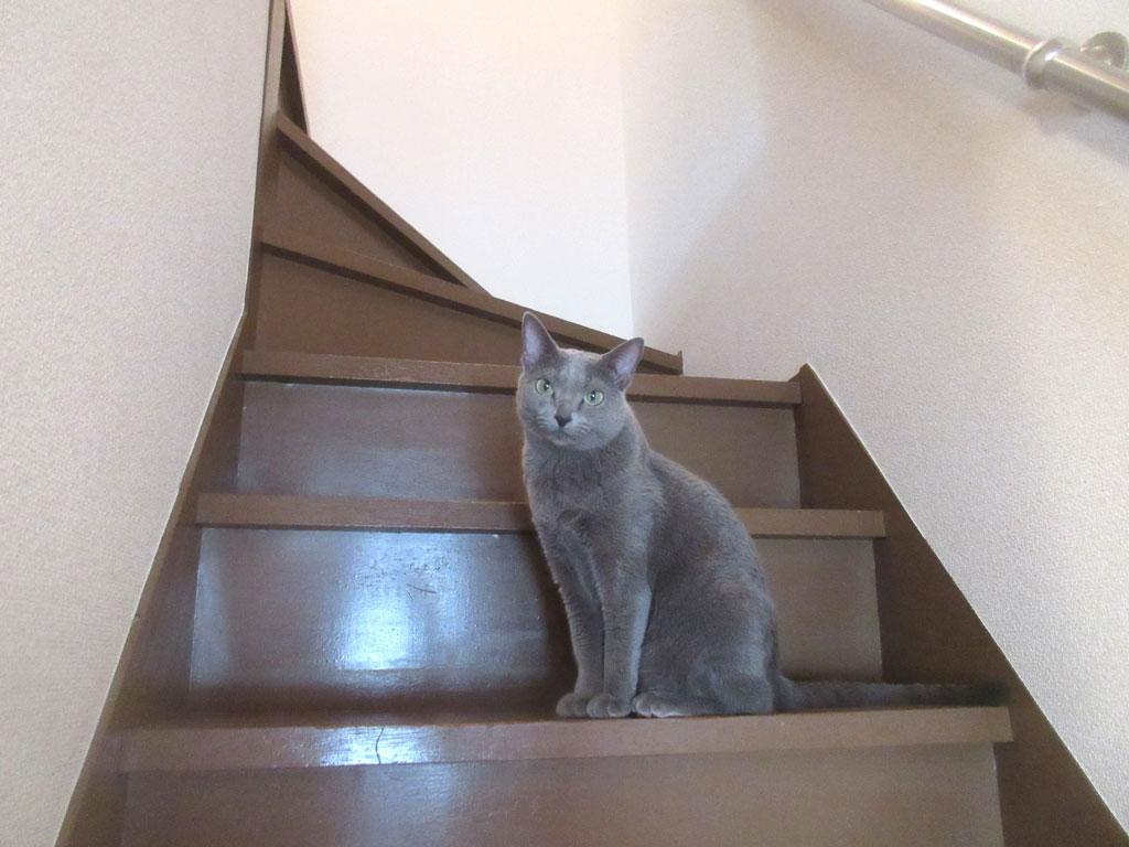 美猫なロシ子。