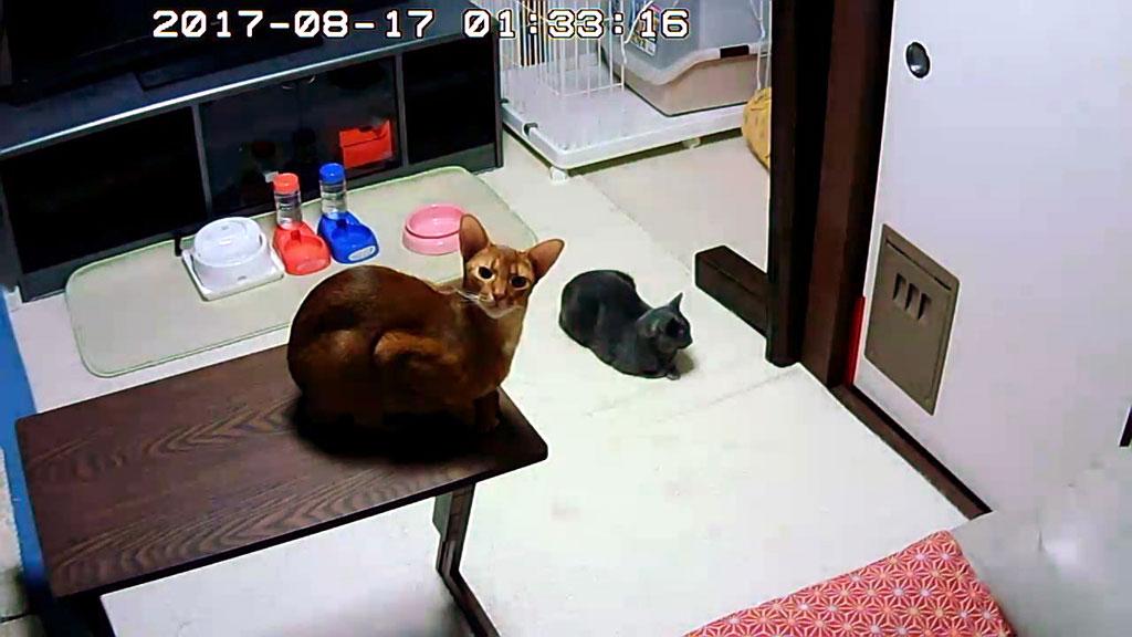 私を待っていた猫たち。