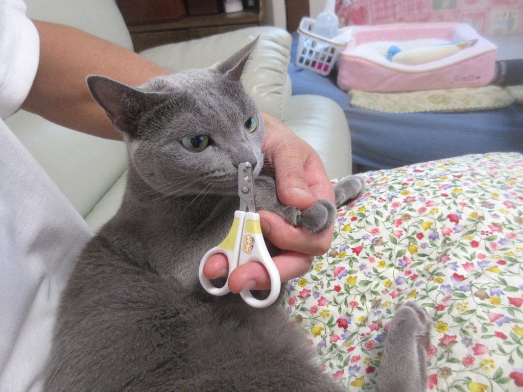 ロシ子の爪切り。