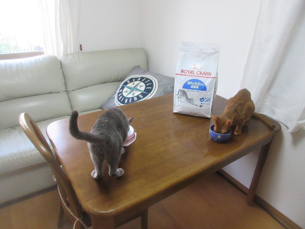 残していたご飯を猫たちに。