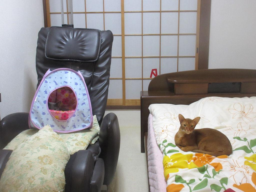 ロシ子がキャットテントに。