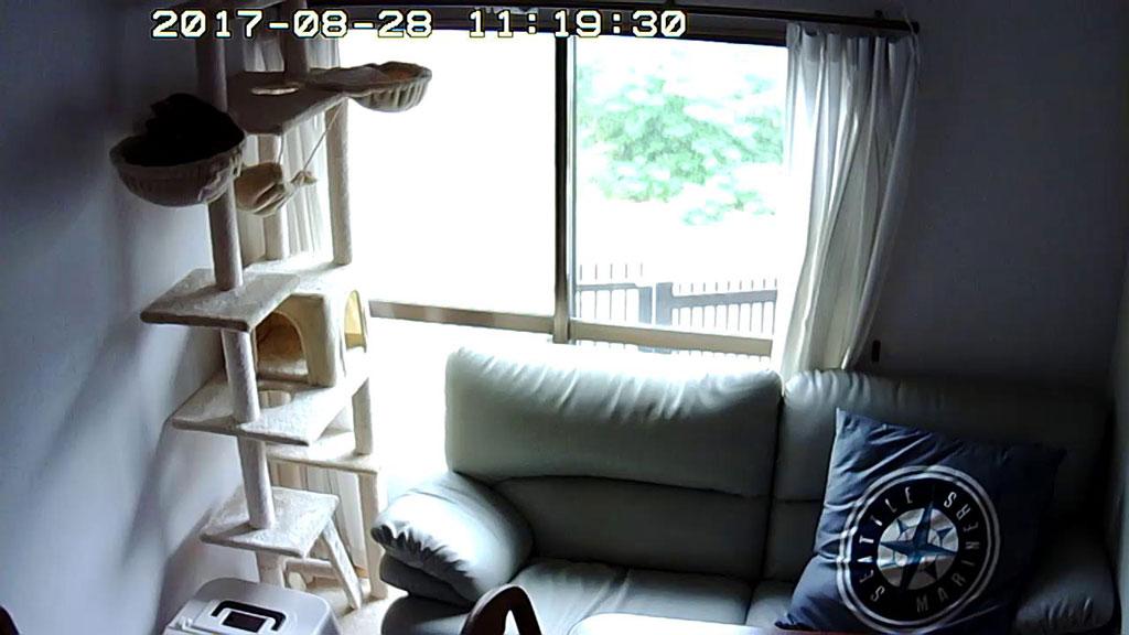 ロシ子がソファーの向こうに。