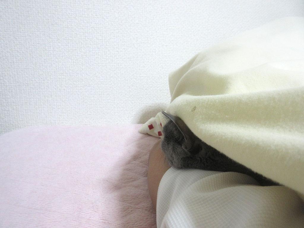 ロシ子が一緒に寝てくれた。