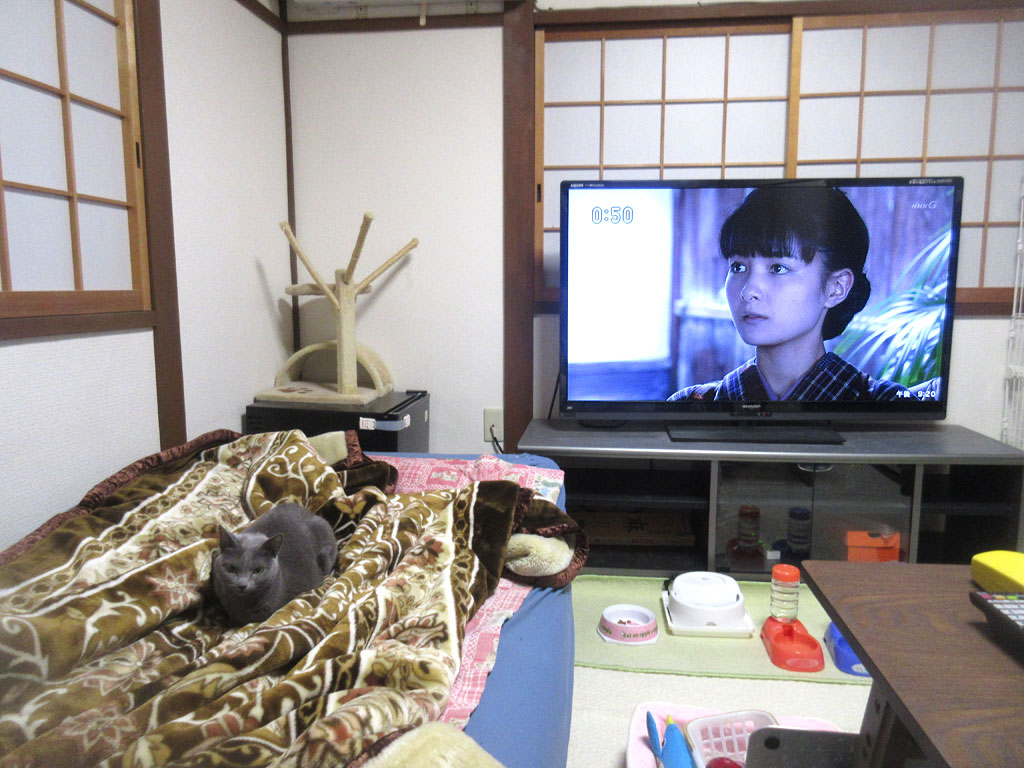 NHKの朝ドラ。