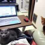 私に群がる猫たち。