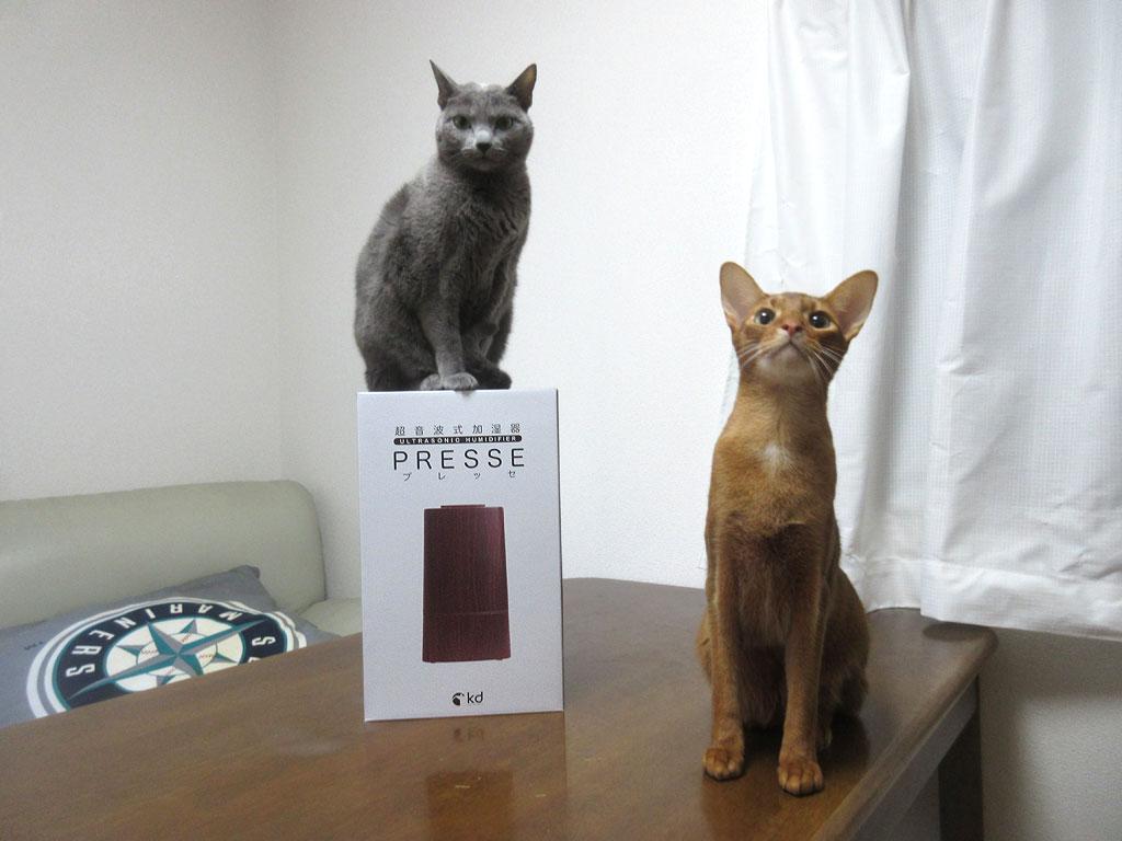 勢揃いの猫たち。