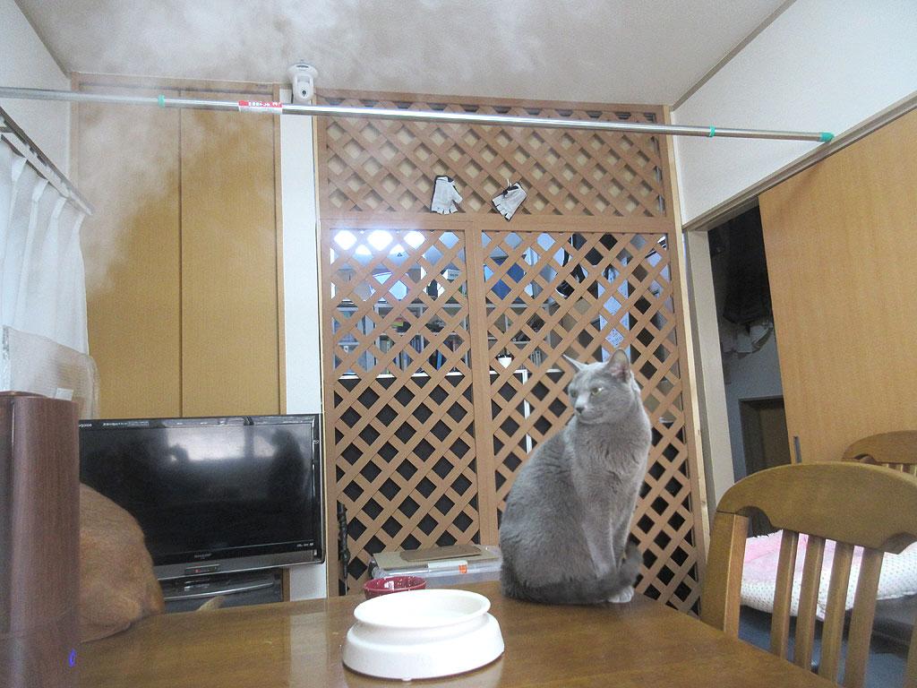 加湿器を見るロシ子ちゃん。