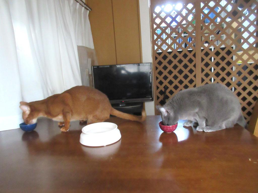 食欲旺盛な猫たち。