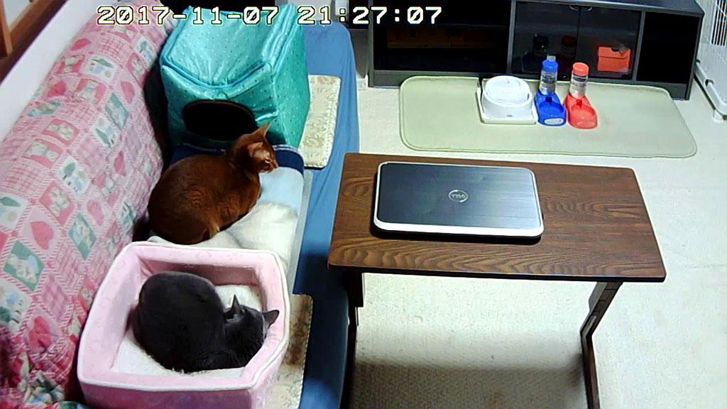 10日前の我が家の猫たち。