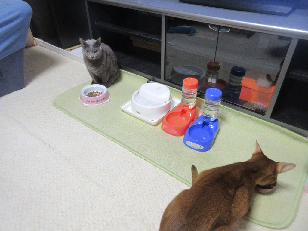 旅行前日の猫たちの晩ご飯。
