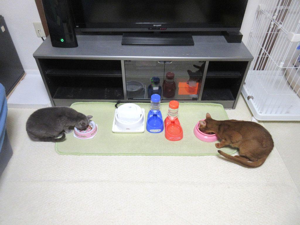 ロシ子の今日の晩ご飯。