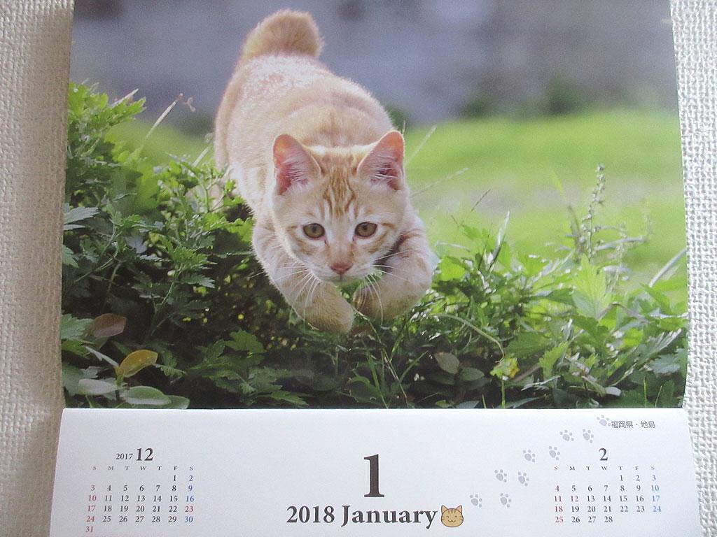 今月、1月の猫ちゃん。