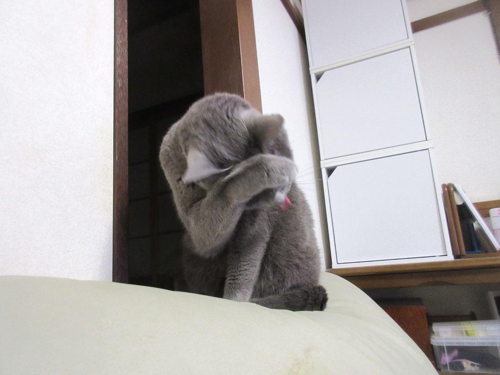猫って面白い。