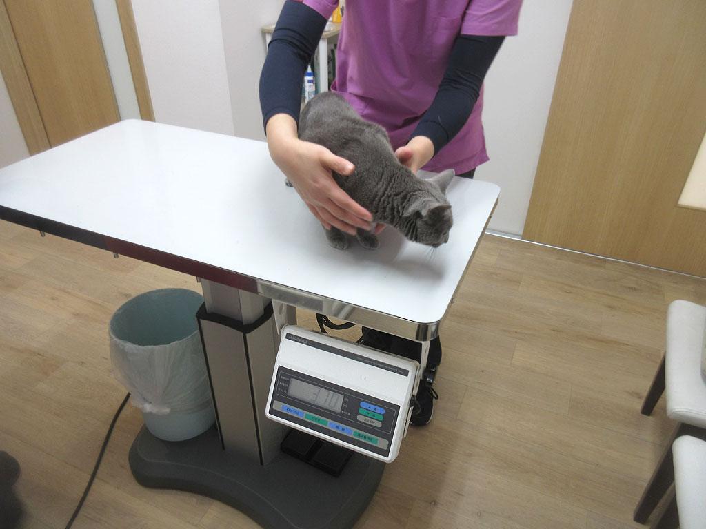 まずはロシ子の体重測定。