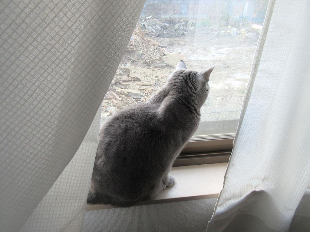 解体現場を眺めるロシ子ちゃん。