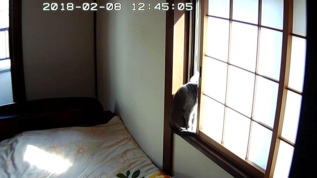 お外を眺めるロシ子ちゃん。