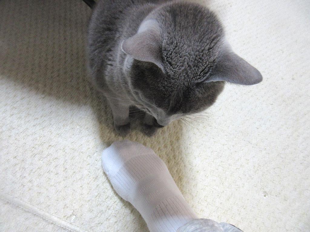 私の足元のロシ子ちゃん。