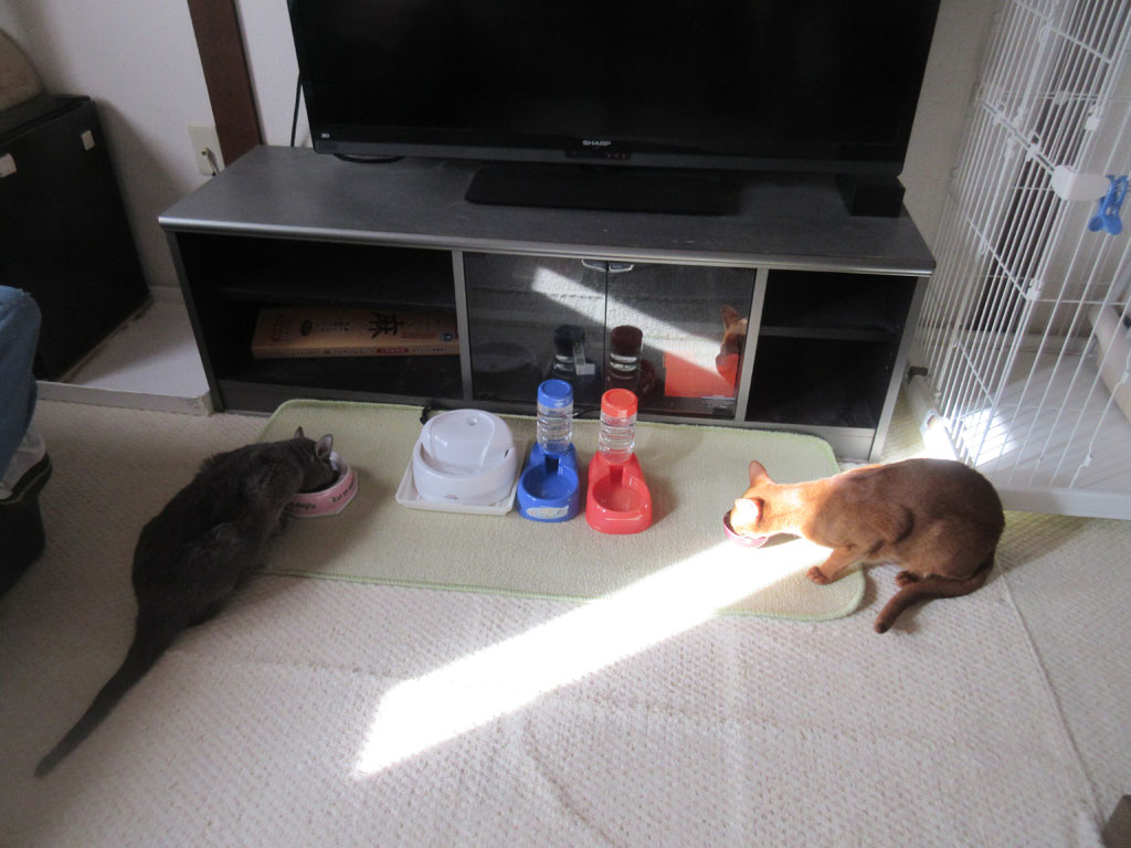猫たちの朝ご飯の風景。