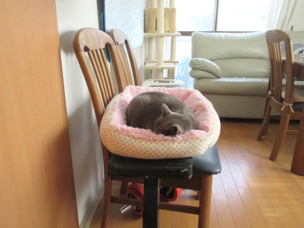 1階でお眠のロシ子ちゃん。
