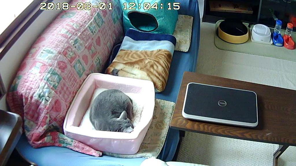 2階で寝んねのロシ子ちゃん。