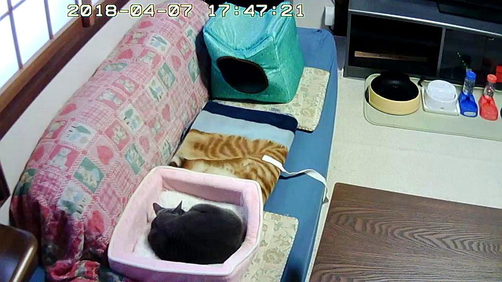 釜山のホテルでチェックのロシ子ちゃん。