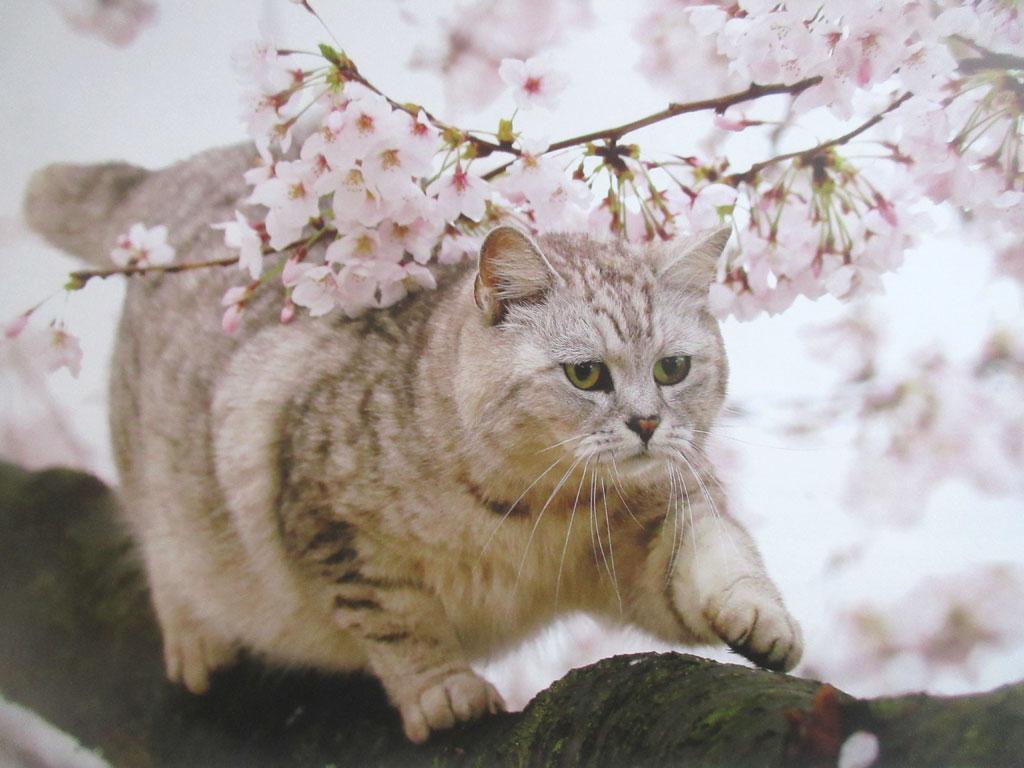 尾道の猫ちゃん。