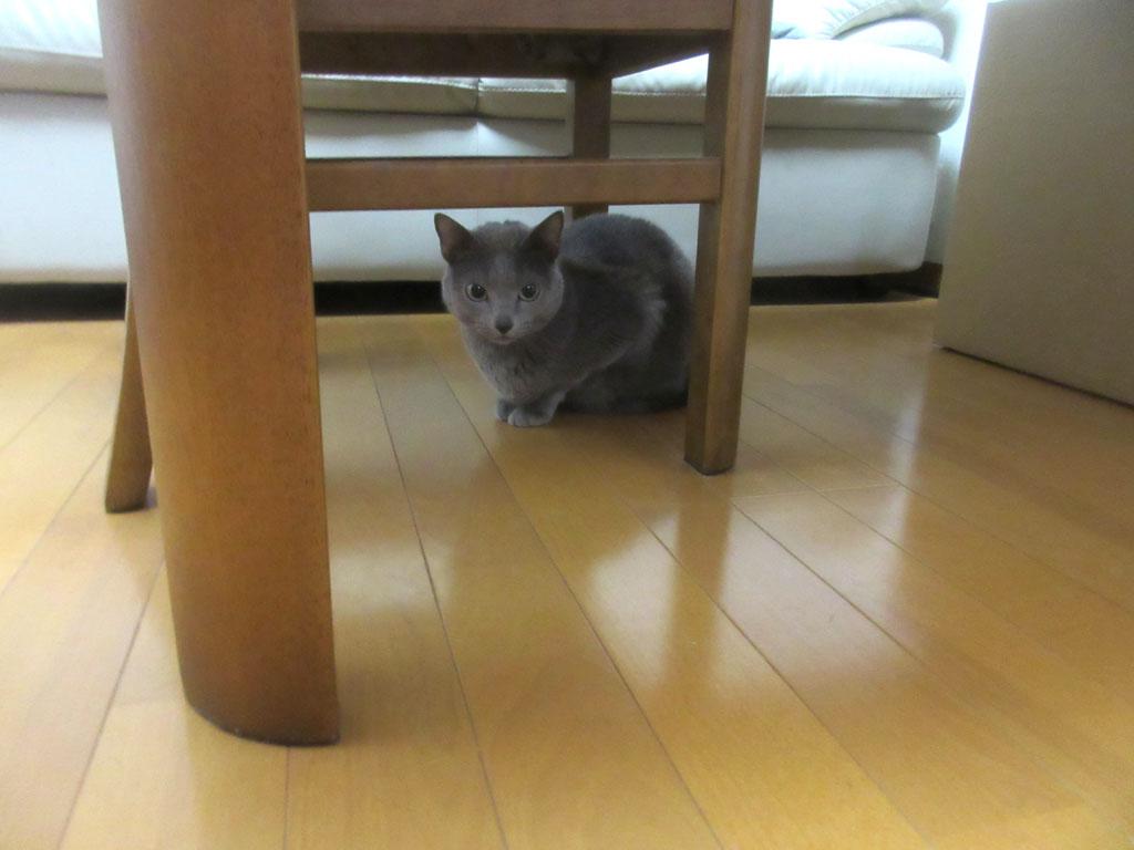 ロシ子も1階へ。