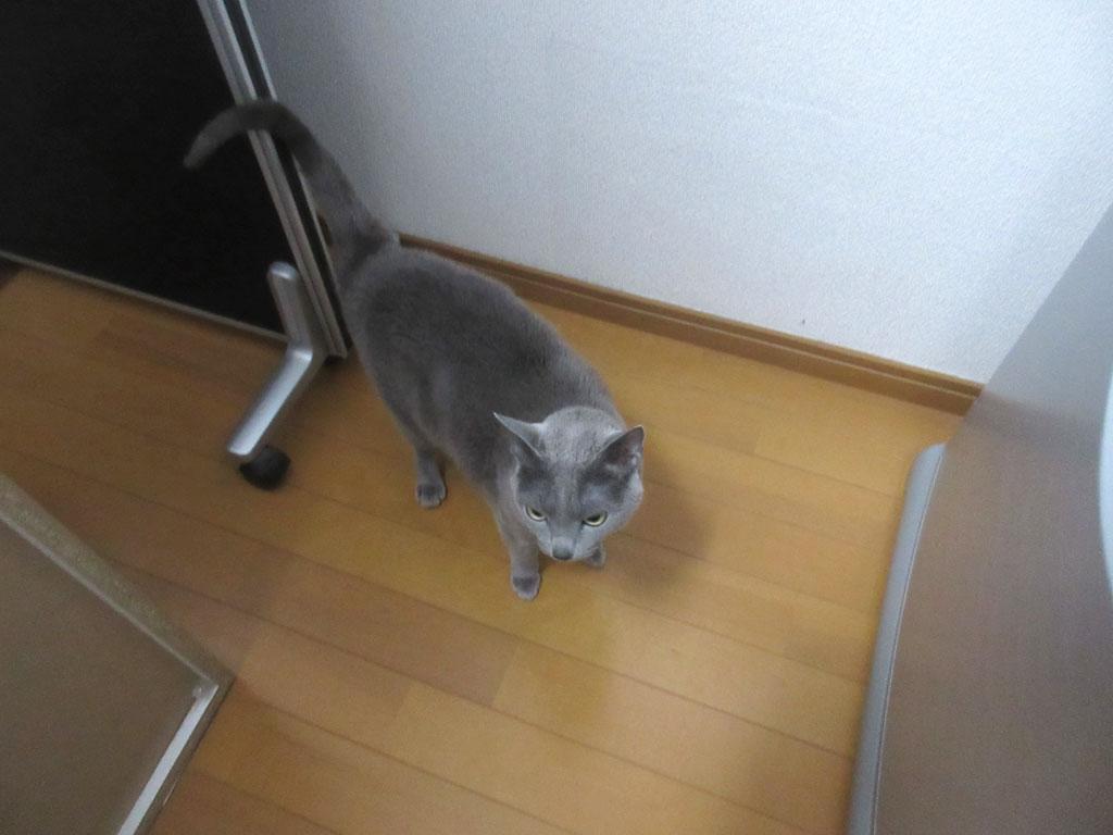 ロシ子が台所に。