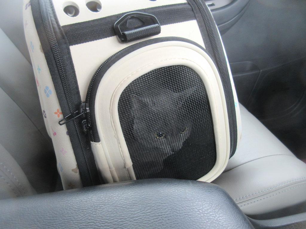 車中のロシ子ちゃん。